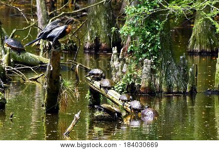 Turtles lined up on a log gathering the warmth of the Sun.