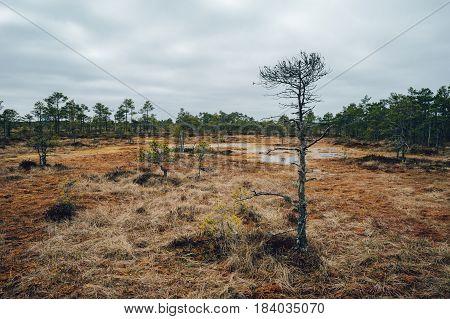 Kakerdaja fen by early springtime Jarva county Estonia