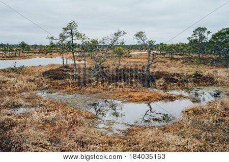 Kakerdaja bog by early springtime Jarva county Estonia