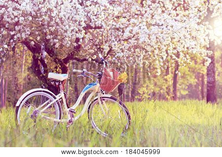 Stop for a picnic under the blossoming apple tree at sunset/ spring pastime weekend