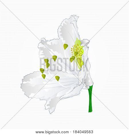 Blossoms white rhododendron eleven Mountain shrub vector illustration