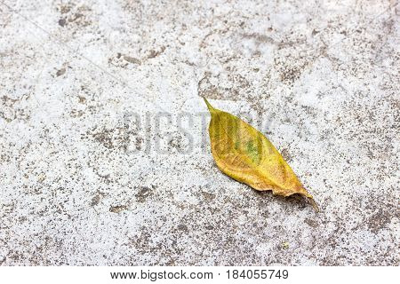 Dry leaves on the cement floor. Top view with copy space for design