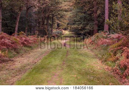 Path in the New forest, Hampshire, UK. Late autumn