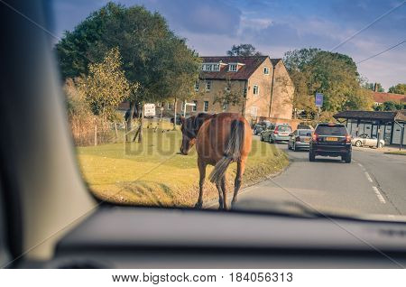 Winchester, New Forest, England - 15 October 2016. Horse crossing the street