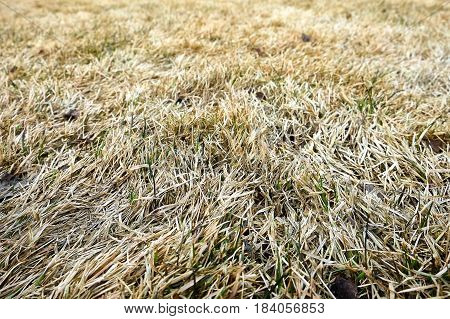 the beautiful background of dry yellowed grass