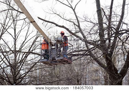 workers in the construction cradle pruned branches from trees
