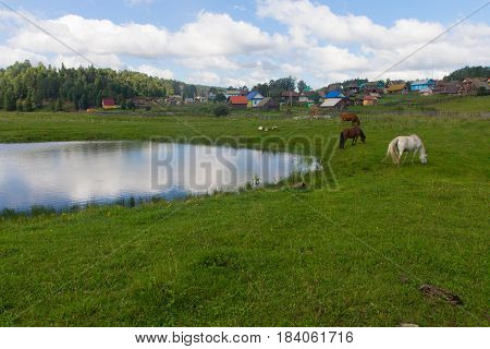 Horse and cow graze in a meadow near the village in Russia countryside