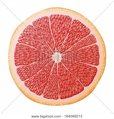 Grapefruit slice close up. Section of grapefruit fruit isolated on white background. Qualitative vector illustration about fruits agriculture cooking food gastronomy etc