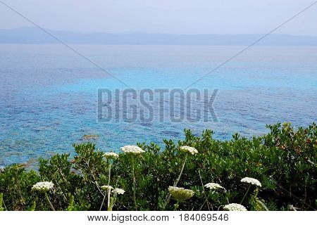 View on the sea with beautiful water colors mountains and flower typical for the Corsica Island France.