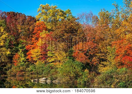 A colorful selection of Autumn leaves at Schoolys Mountain Park in Morris County NJ.