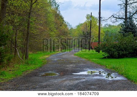 road with leaves in the forest. Many green trees outdoors. All the way in the shadow thrown by high trees. Streams of water flowing down the road.