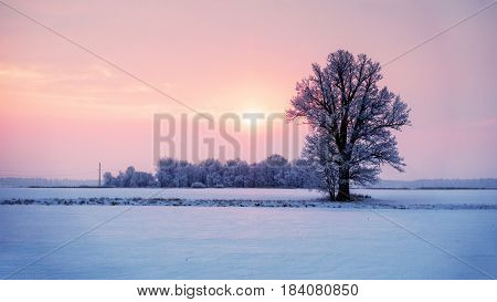 Abstract winter sunrise landscape with a lonely tree and colorful sky.