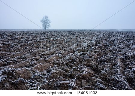 Frosty plowed field and a lonely tree in fog.