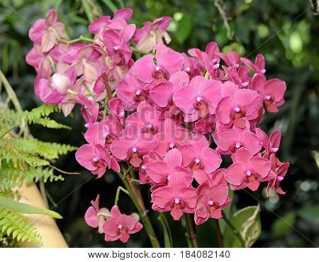 Large Pink Orchid Flowers