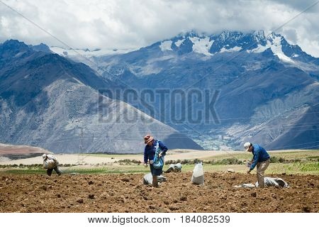Farmers manually spread fertilizers on the plowed land after planting potatoes. October 18, 2012 - Maras, Urubamba Valley, Peru