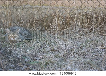 Grey Striped Cat Lying On Grass