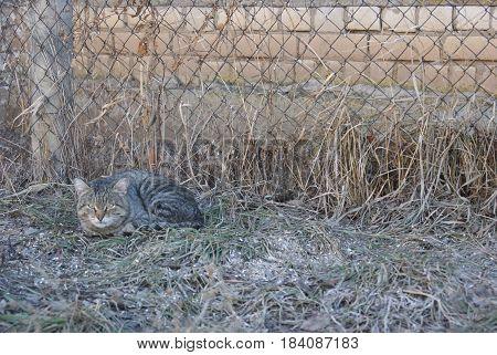 Grey Striped Cat Lying On Grass