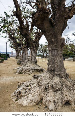Barcelona Spain. Montjuic park. Tree trunk garden