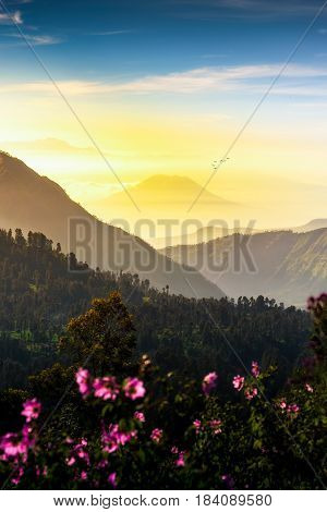 Mount. Bromo at Bromo tengger semeru national park East Java Indonesia bromo beautiful sunrise. Bali Indonesia sunrise. Bali Indonesia mount. Bali Indonesia landmark. Bali Indonesia landscape.