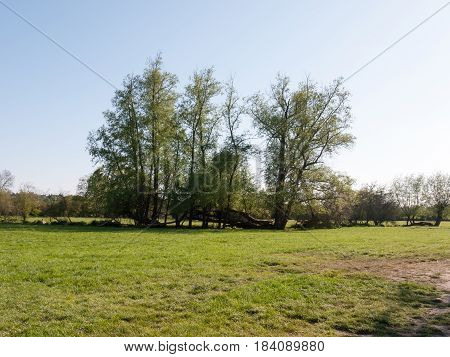 Spring Time Day Time Tree Line In Countryside Beautiful