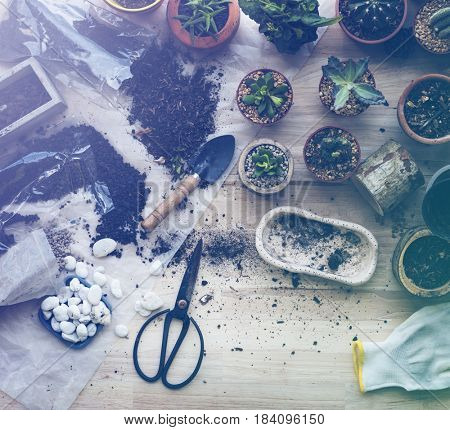 Planting Plants Cactuses Soil Stones On A Wooden Table
