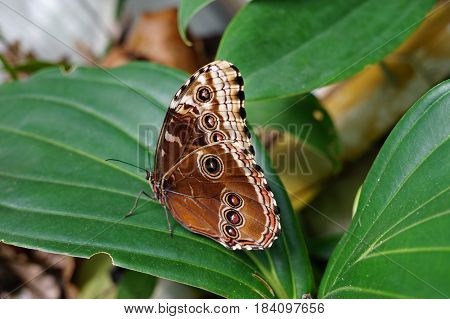 Large receding butterfly suitable as a background or wrapper