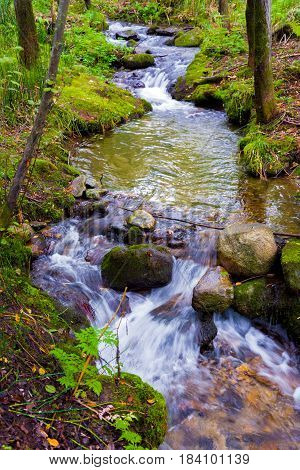 Beautiful creek in a wild forest with waterfalls