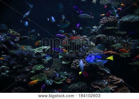A photo of tropical fish in an aquarium