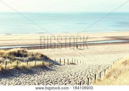 Sandy Dunes On The Sea Coast In Noordwijk, Netherlands