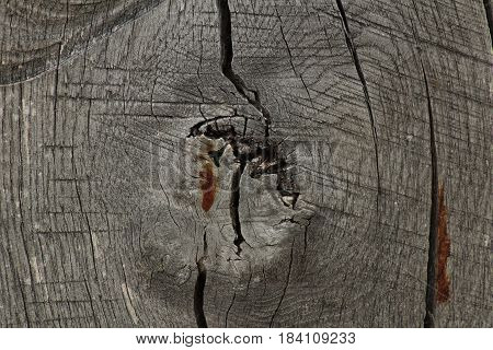 Wood texture background/ This is a detail of wooden beam.
