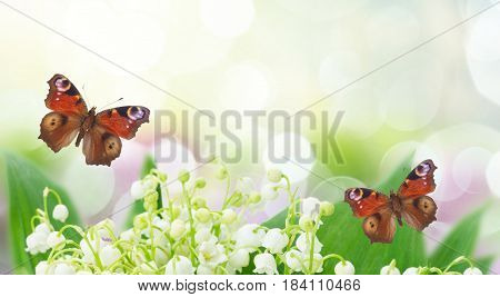 Bunch of Lilly of valley close up in garden with butterflies banner