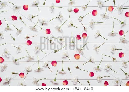 Pattern of cherry blossom flowers and red rose petals on a white wooden background. Flat layout, top view