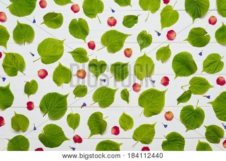 Pattern of green linden tree leaves and red rose petals on a white wooden background. Flat layout, top view