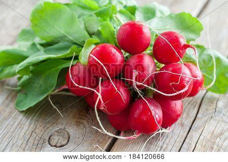 Fresh ripe radishes bundle on wooden board.