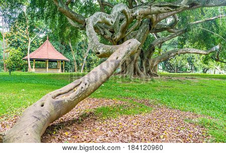 The Scarry Tree