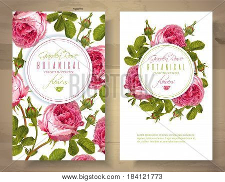 Vector botanical vertical banners with garden rose flowers on white background. Floral design for natural cosmetics, perfume, health care products. Can be used as greeting card, wedding invitation