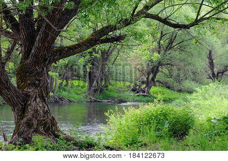 Bushes and trees of the Yantra river in Vetrintsi village in Bulgaria