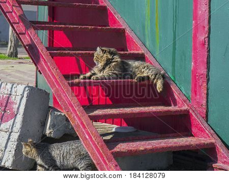 The cute furry cat lies on the stairs