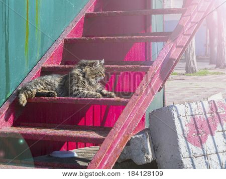 The furry cat lies on the stairs