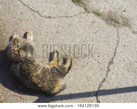 The cute furry cat lies on the ground