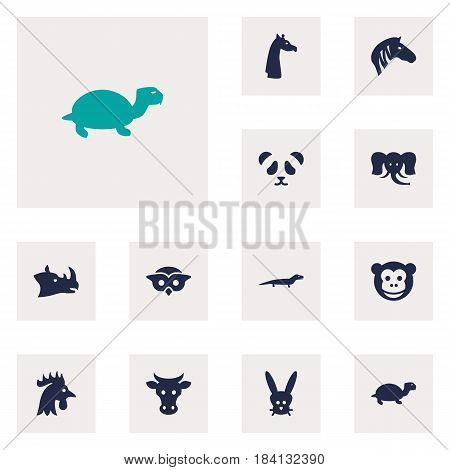 Set Of 12 Brute Icons Set.Collection Of Trunked Animal, Horse, Tortoise And Other Elements.