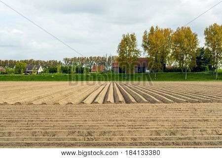 Recently seeded potatoes in a field next to an embankment in a Dutch polder. It is in the beginning of the spring season now.