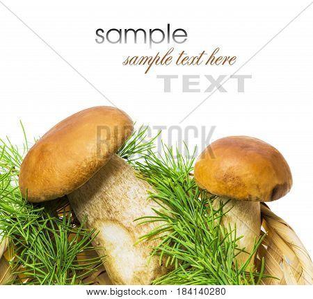 Basket With Porcini Mushrooms