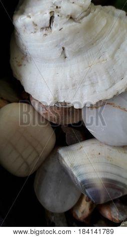 Caracoles y piedras bendecidas por el mar del caribe