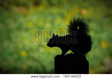 Squirrel waits on a fence post for just the right moment.