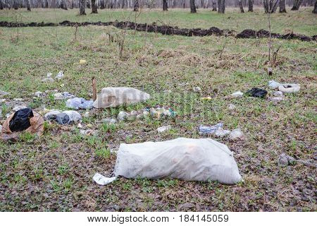 Garbage In The Wood. Environmental Disaster. The Scattered Garbage In The Wood.