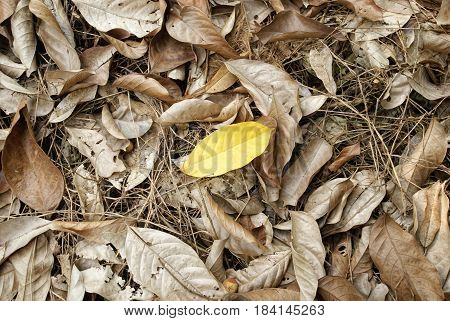 dry leaves, Yellow leaves, dried leaves, dry leaves background