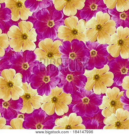 Seamless infinite floral background. For design and printing. Background of natural orange and purple Violets. Nature.