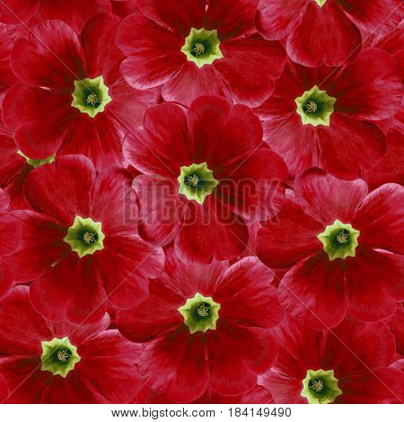 Seamless infinite floral background. For design and printing. Background of natural red Violets. Nature.