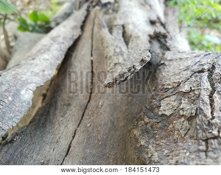 Close up picture of dried and death wood bark